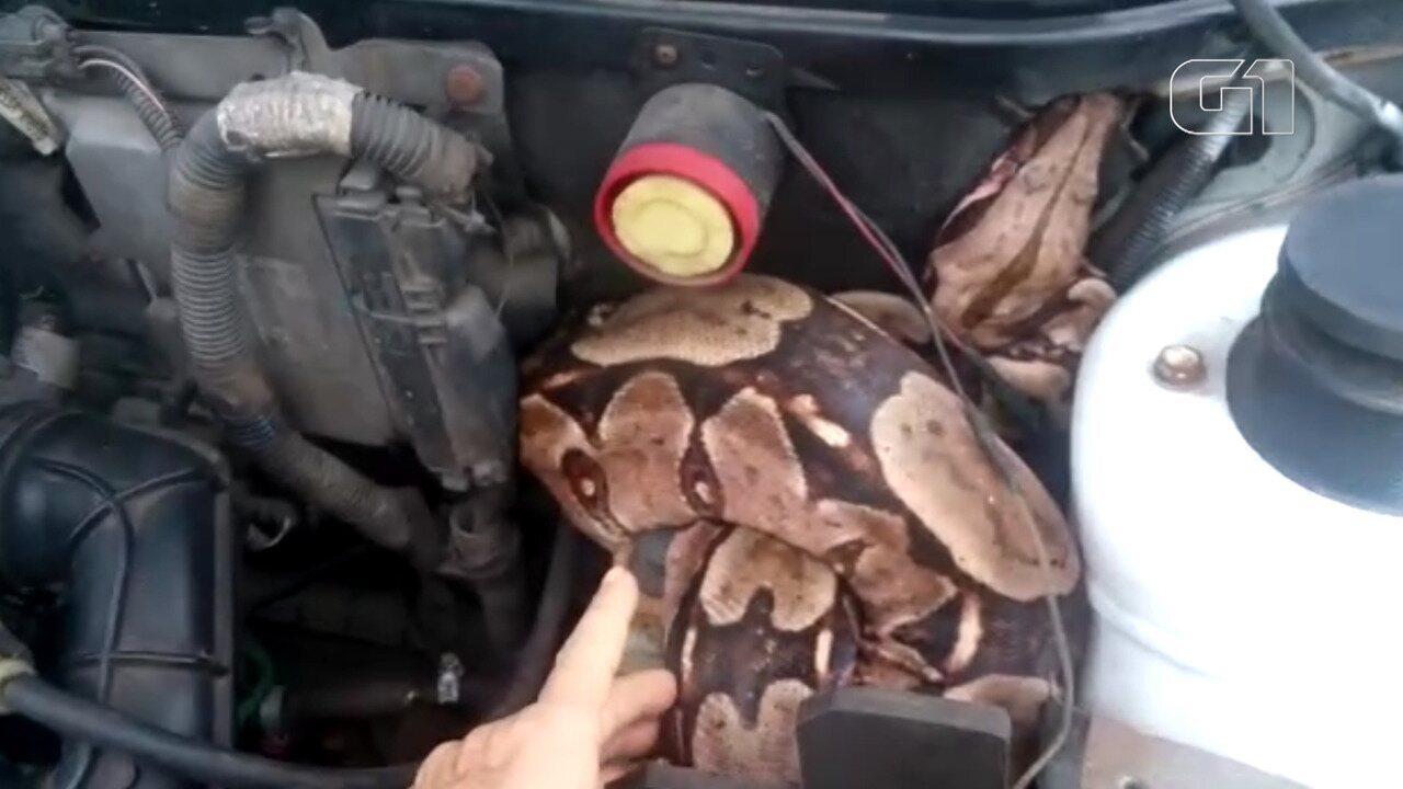 Cobra é achada em cima de motor de carro