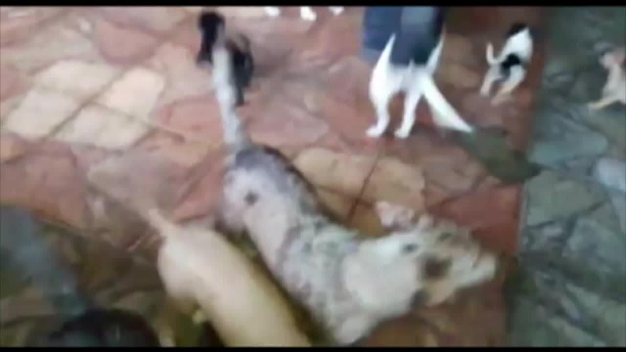 Polícia recebe denúncia sobre maus tratos a animais na Pedreira, em Belém