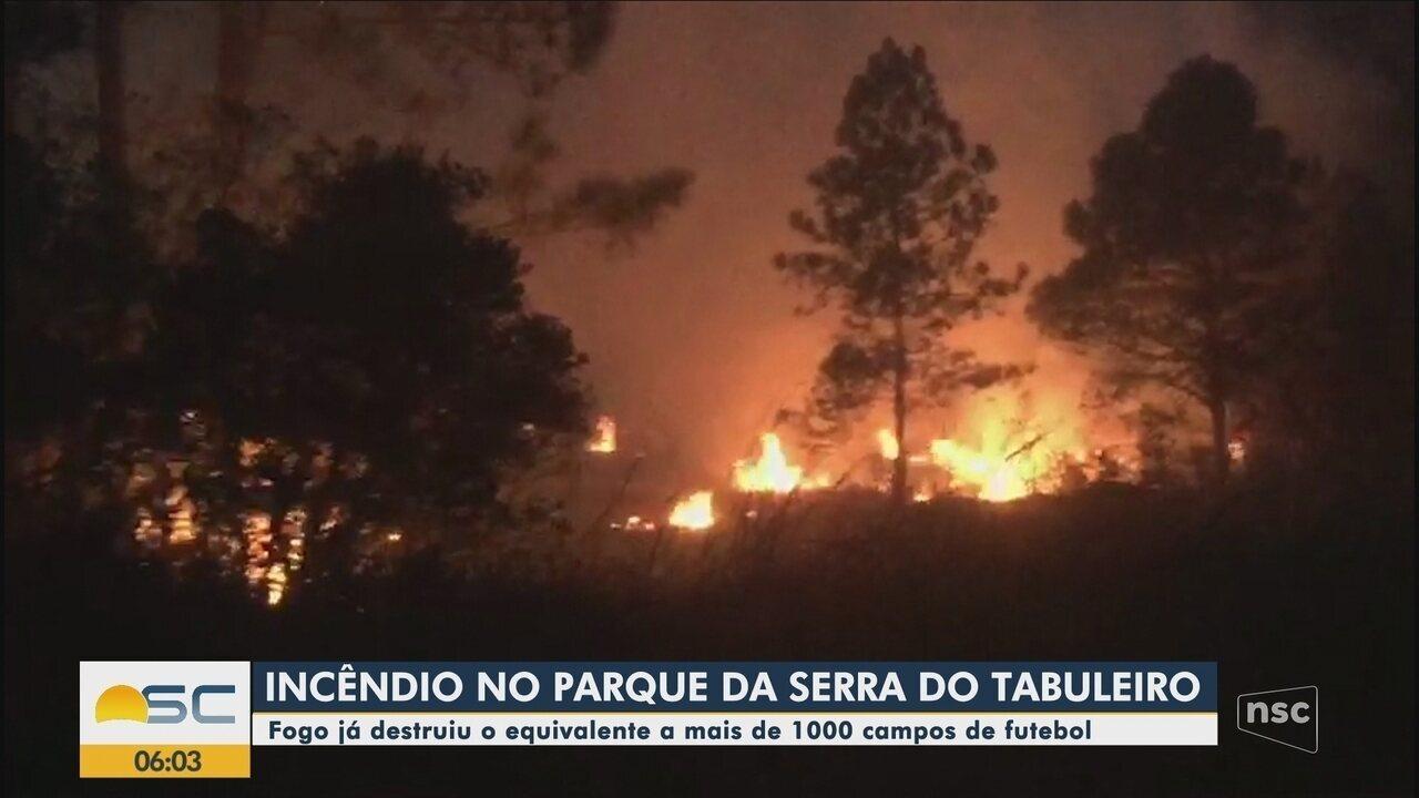 Incêndio em parque de Palhoça atinge cerca de mil hectares e causa morte de animais