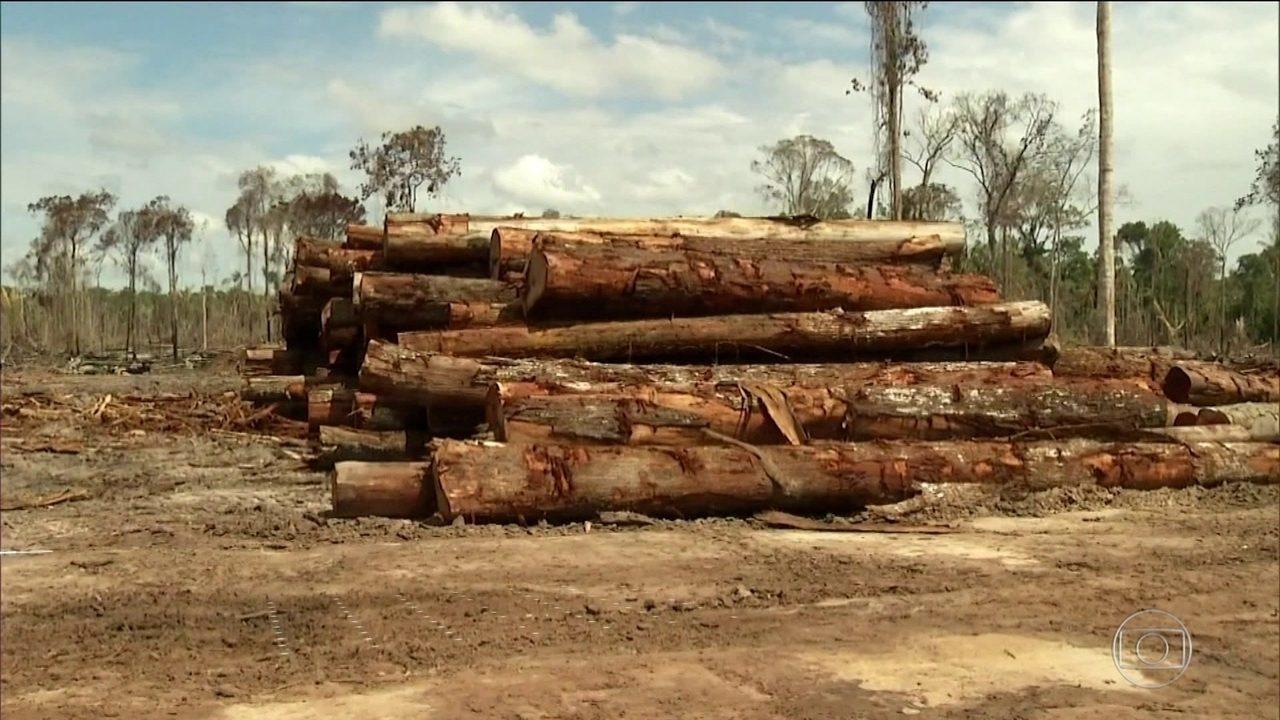 Nenhum desmatador da Amazônia foi condenado nos últimos cinco anos