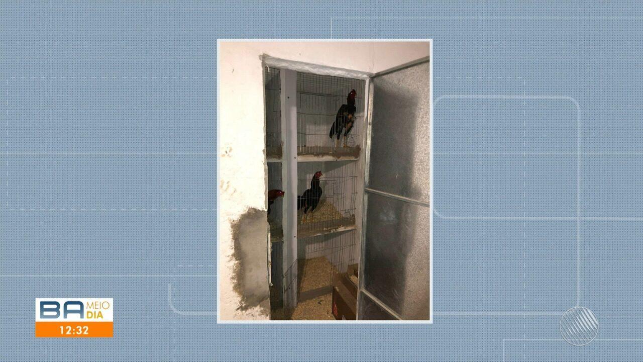 Polícia encontra rinha de galo em sítio na zona rural de São Gonçalo dos Campos