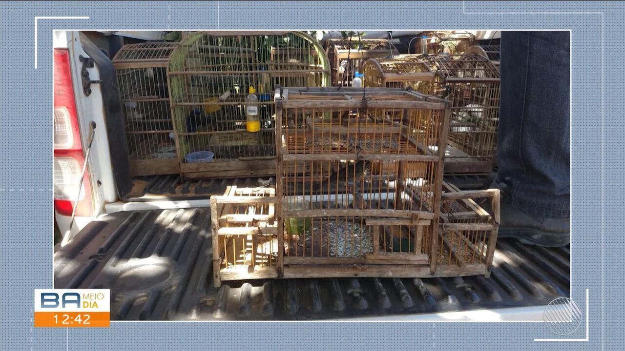 Pássaros silvestres são apreendidos durante operação em Barra do Choça