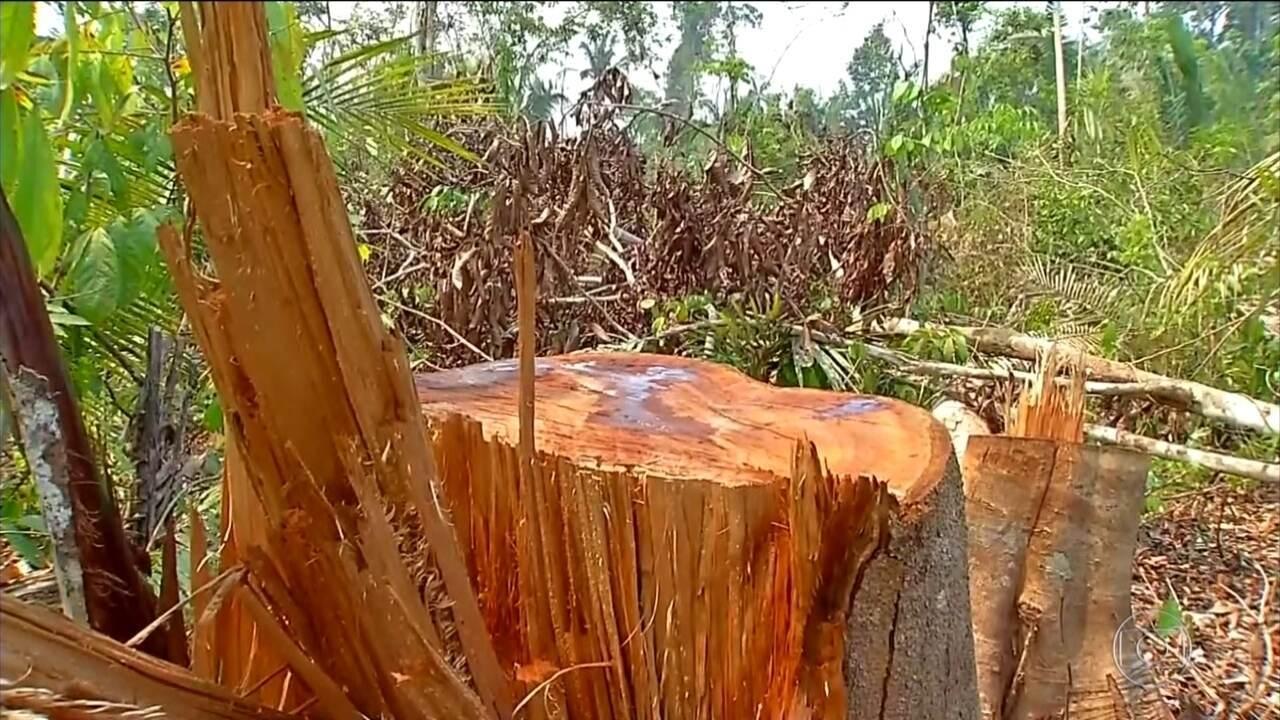 Human Rights Watch: agricultores e indígenas estão entre principais vítimas de homicídio
