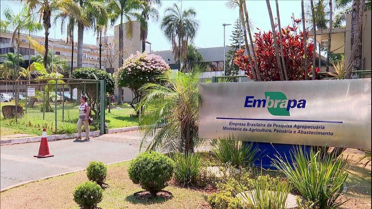 Governo propõe corte de 45% no orçamento da Embrapa para 2020 e pesquisas correm riscos