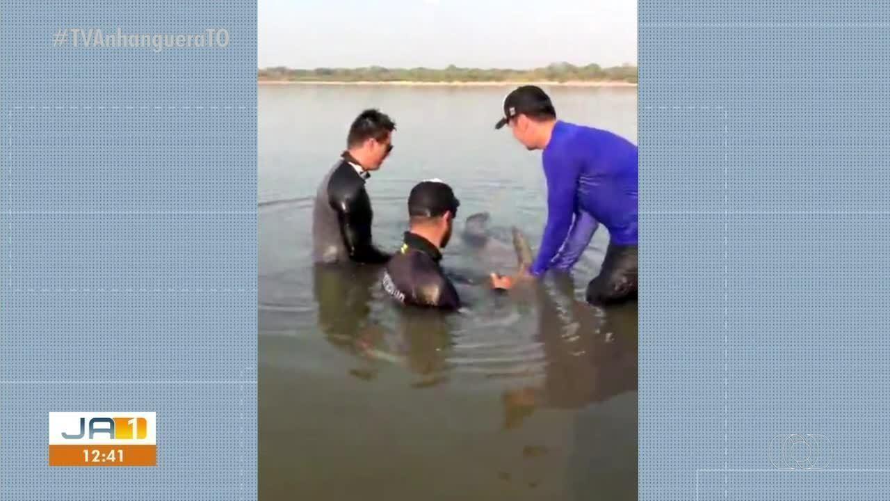 Peixe piraíba de 90kg é devolvido à natureza