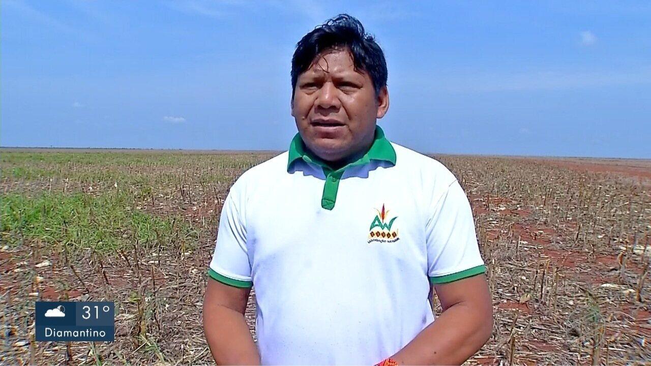 Ibama suspende embargo e índios de 3 etnias podem usar parte das terras para agricultura c