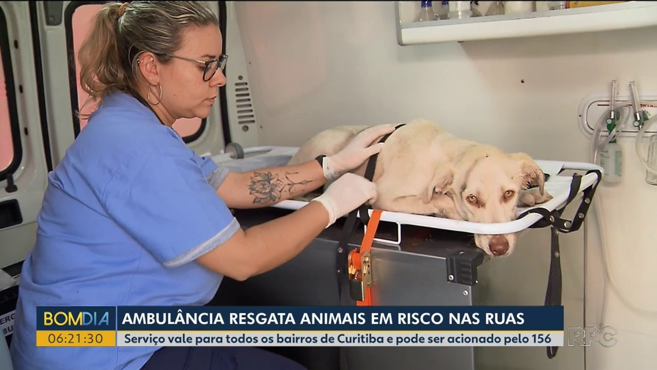 Atendimento de emergência vai atender animais vítimas de acidentes