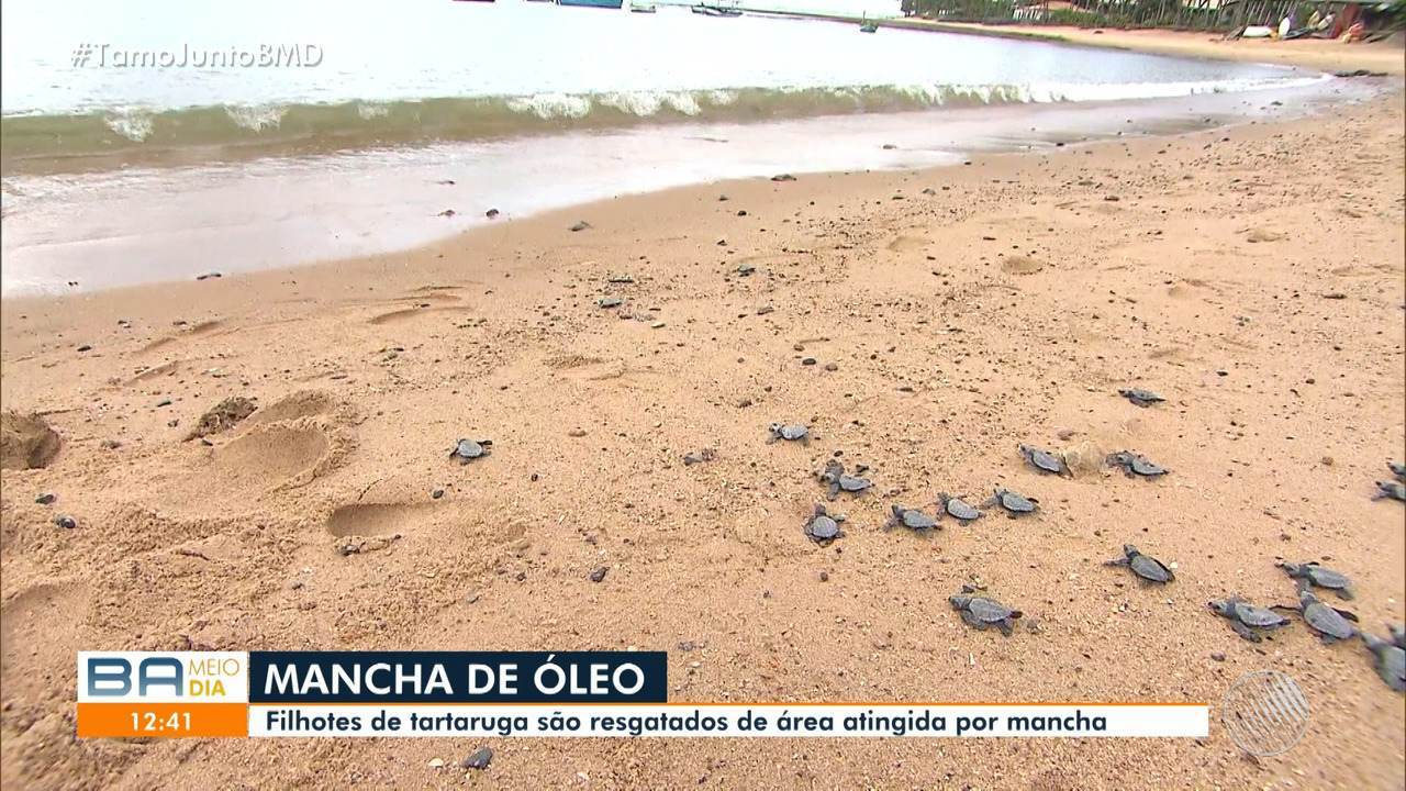 Cerca de 10 toneladas de resíduos de óleo são recolhidos em seis cidades baianas