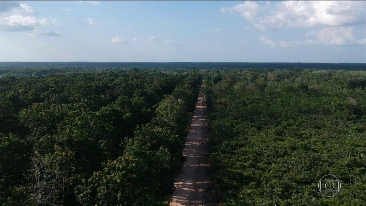 Japoneses desenvolvem produção agrícola sustentável na Amazônia