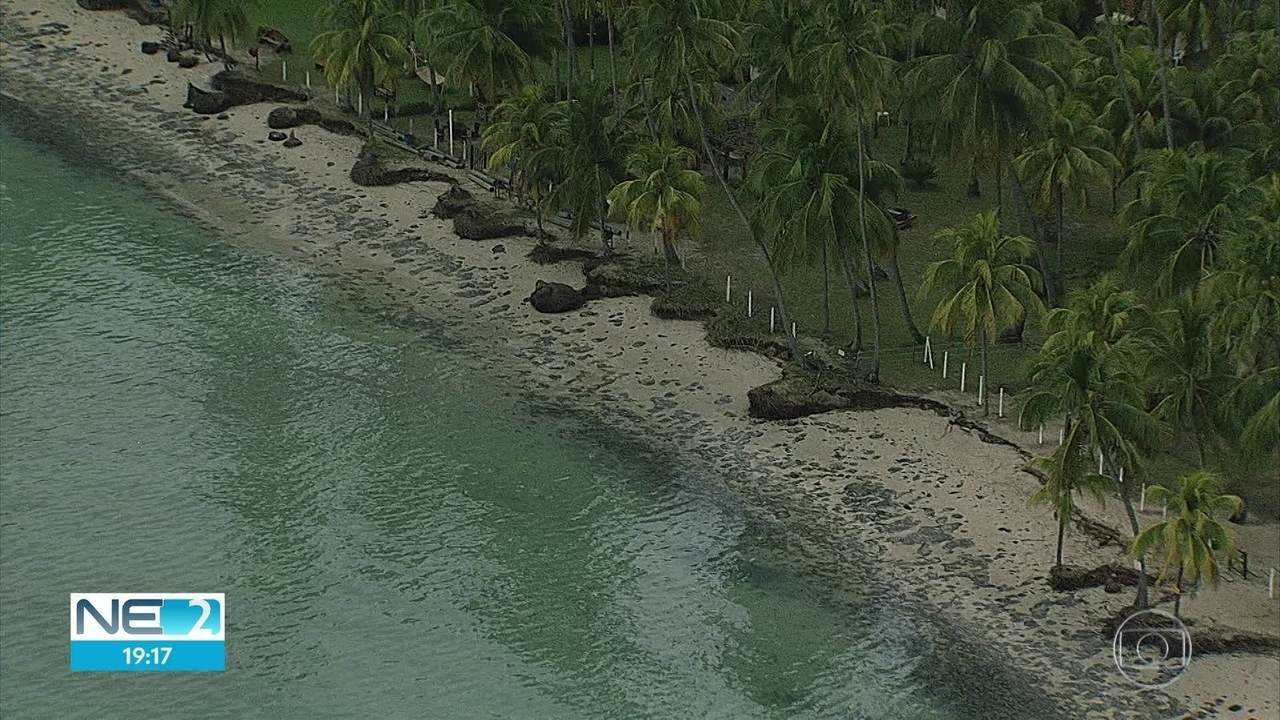 Força-tarefa recolhe 20 toneladas de óleo, nesta sexta-feira (18), em praias