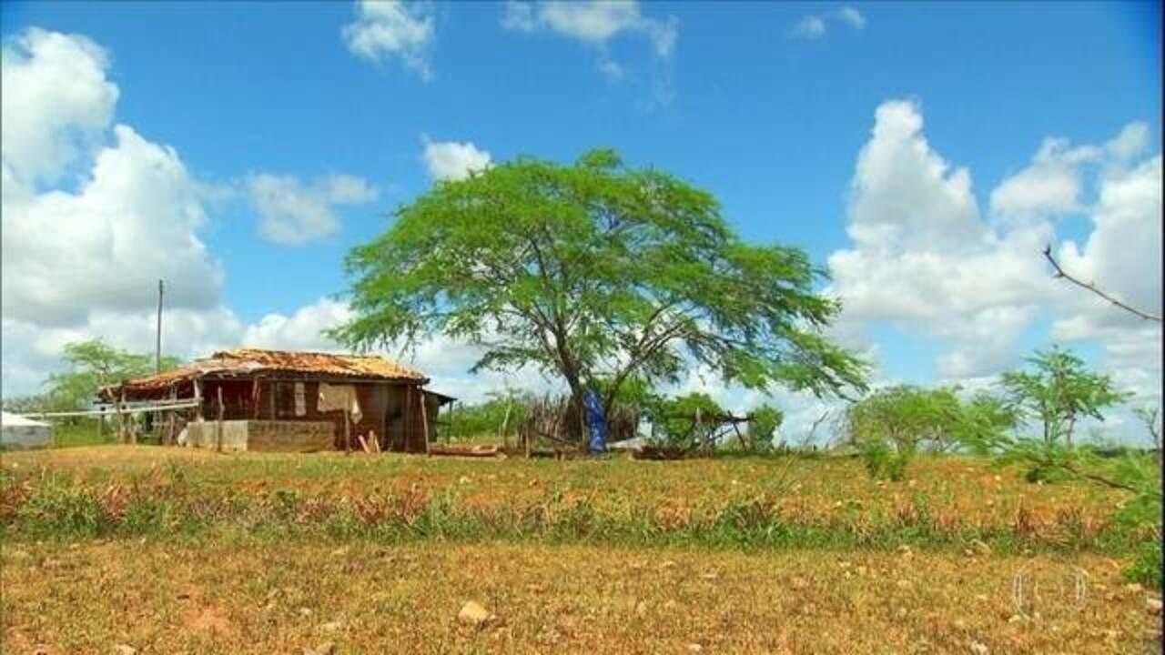 Globo Rural – Edição de 20/10/2019 - Programa mostra como um projeto no sertão de Sergipe está auxiliando produtores a lidar com a seca e ampliar a atividade agropecuária na caatinga. Tem ainda o atraso no plantio da soja em Mato Grosso do Sul e Goiás e mais notícias do campo.