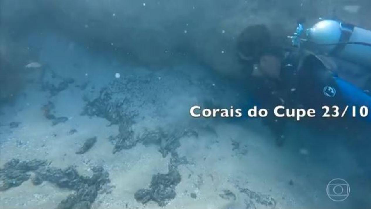 Imagens mostram que óleo ameaça corais em Pernambuco