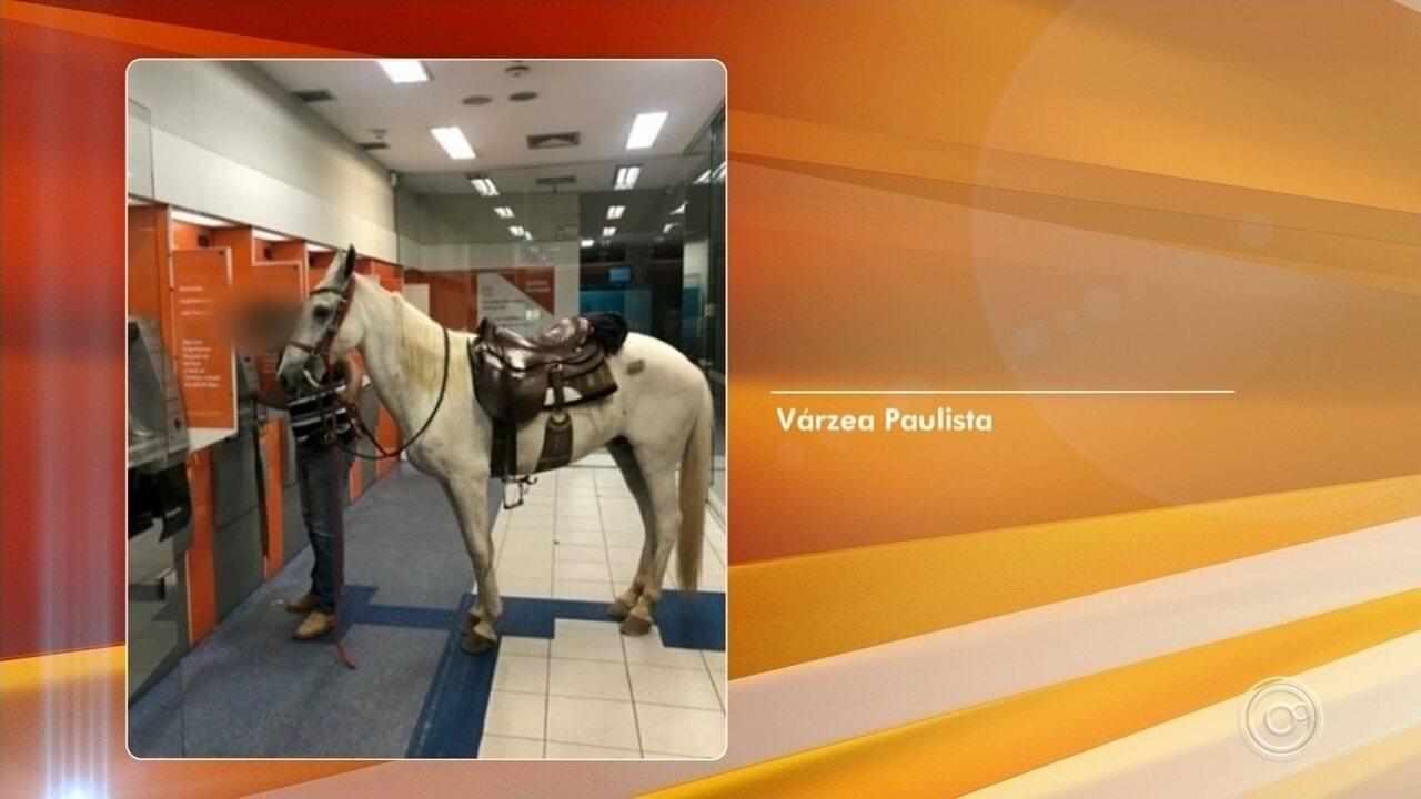 Dono leva cavalo para dentro de agência bancária em Várzea Paulista