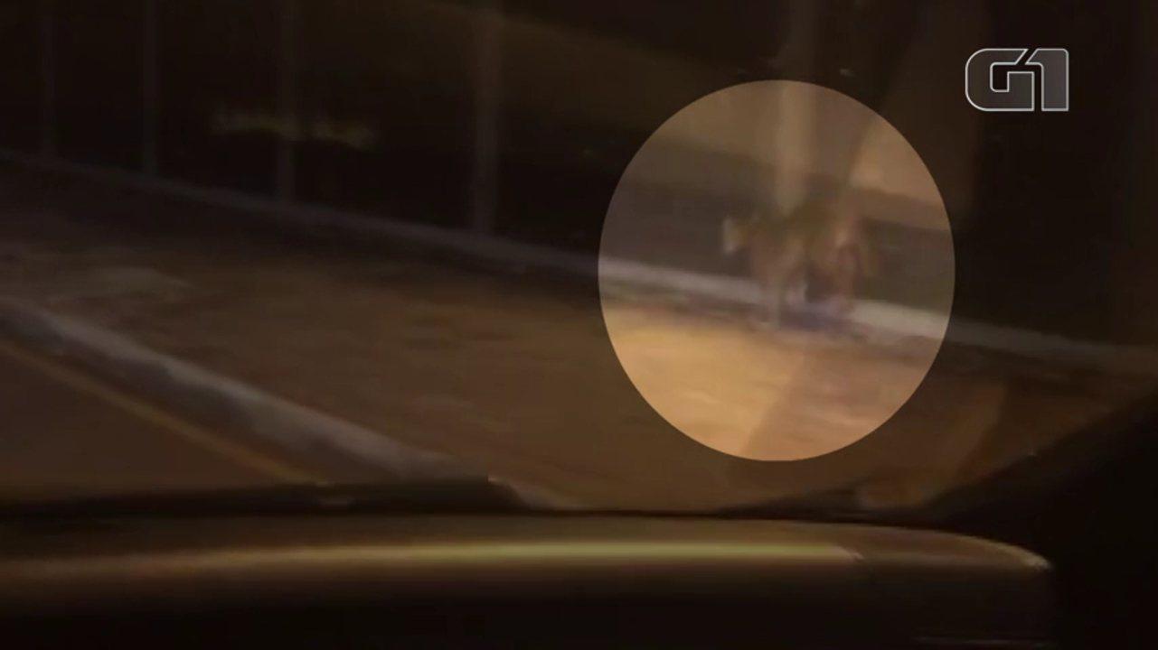 Onça-parda é vista correndo perto de bosque de Campo Mourão