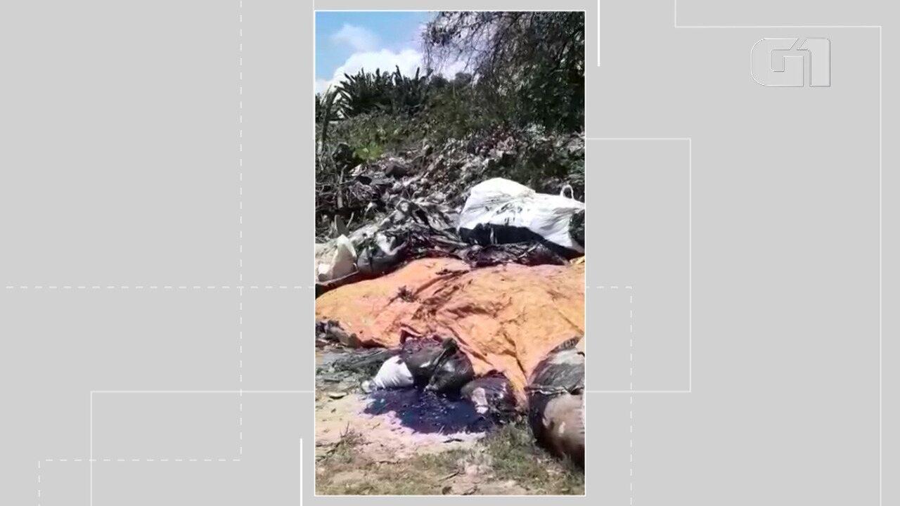 VÍDEO: Moradores de Maraú denunciam descarte irregular de óleo em lixão