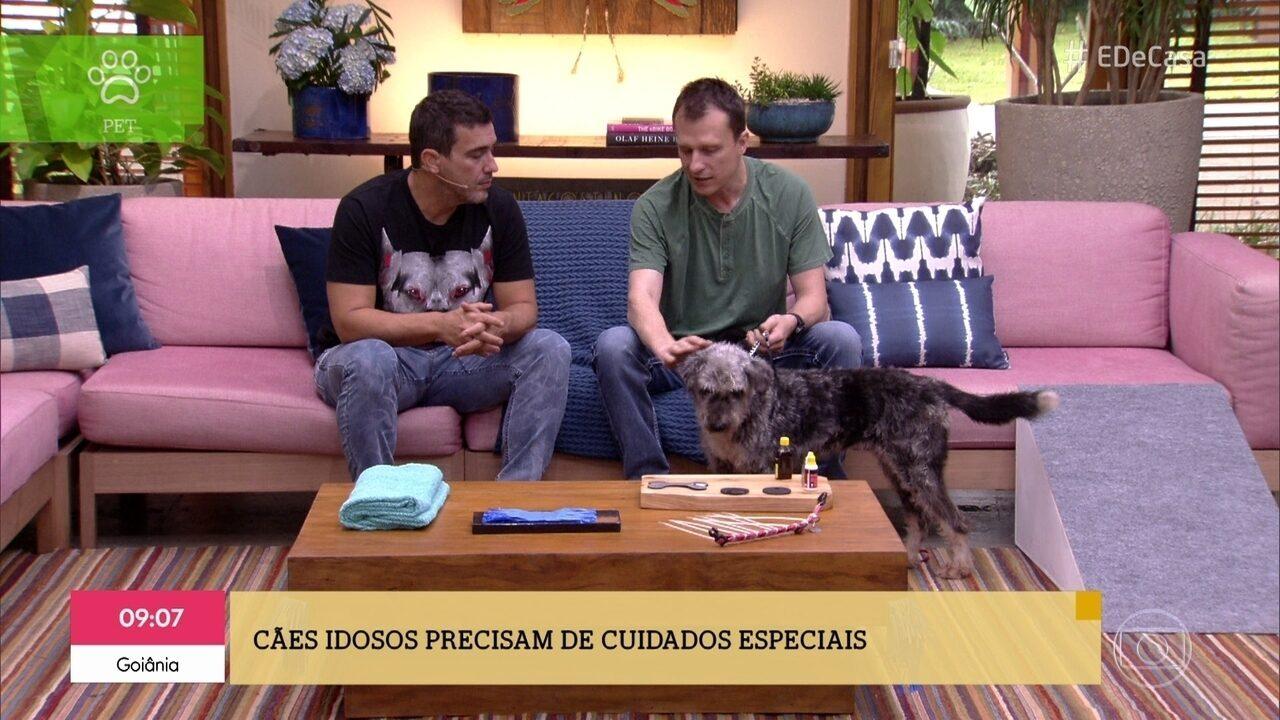 Alexandre Rossi dá dicas para lidar com cachorros idosos
