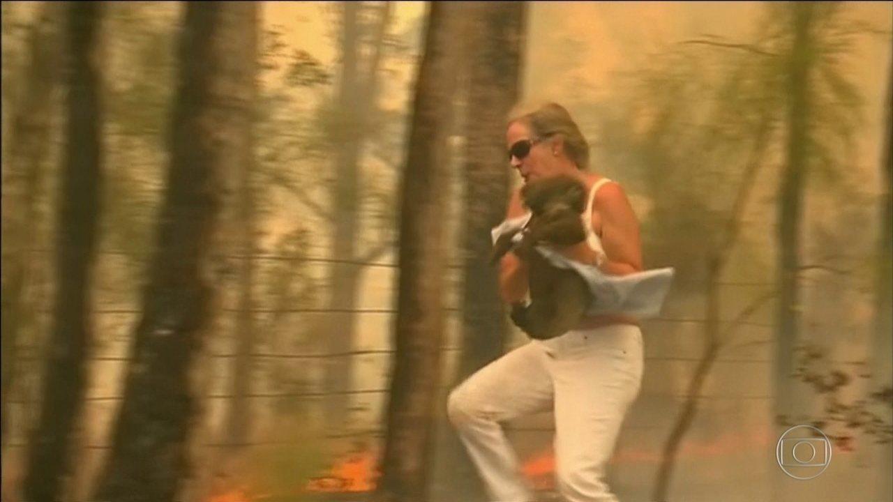 Mulher salva coala que estava machucado em incêndio florestal na Austrália