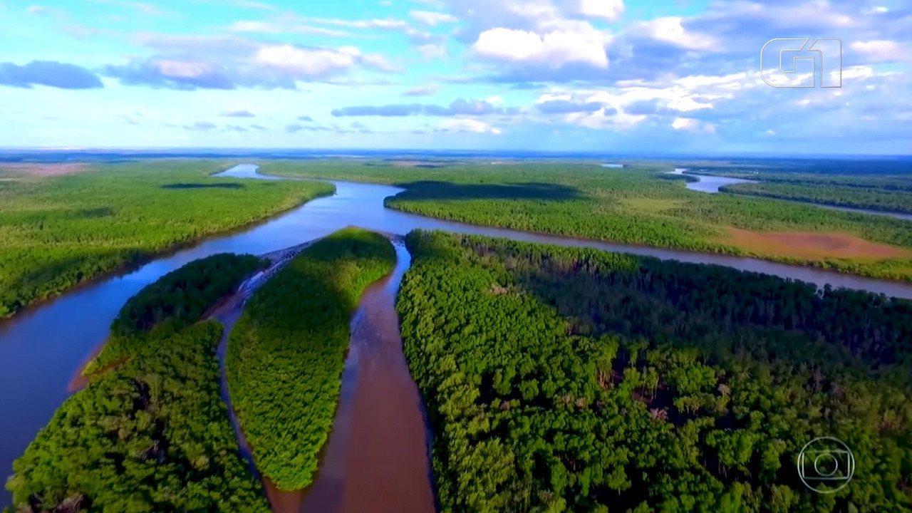 Delta do Parnaíba oferece espetáculo de guarás, dunas e igarapés para amantes da natureza