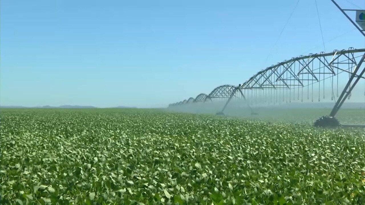 Falta de chuva reduz produtividades das lavouras no sul do Maranhão
