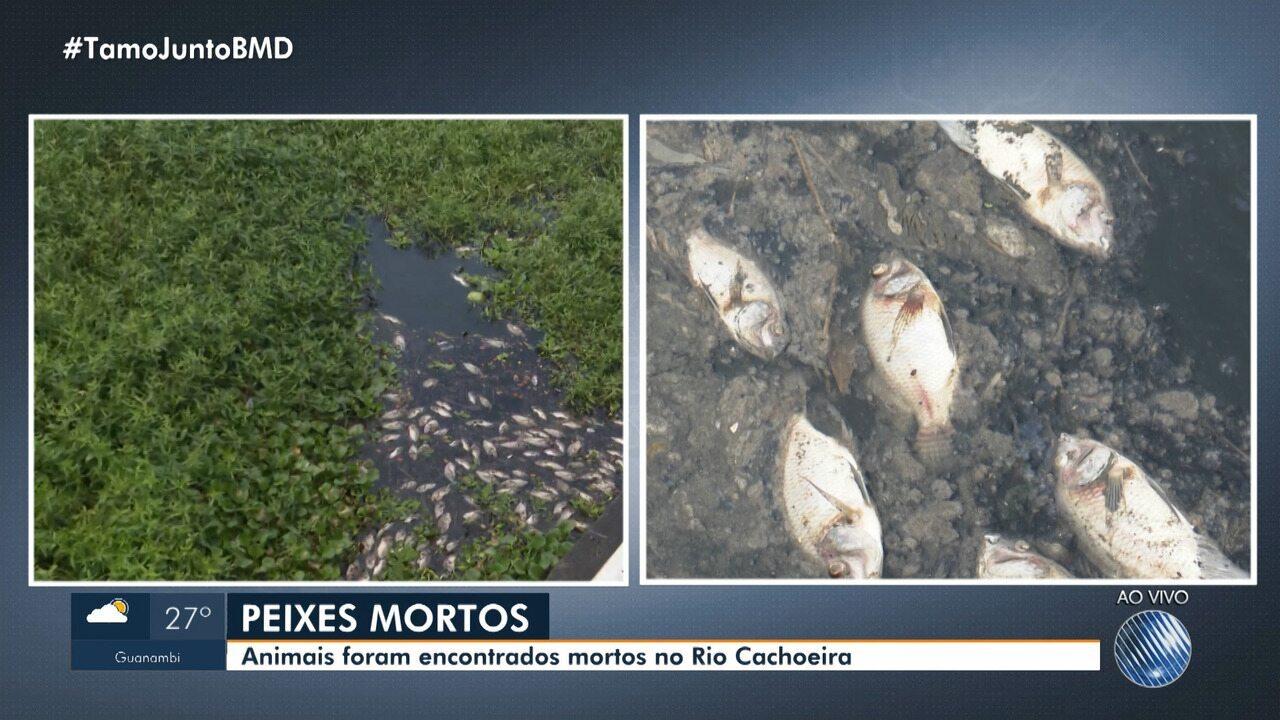 Resultado de imagem para Peixes aparecem mortos em rio de Itabuna, no sul da Bahia