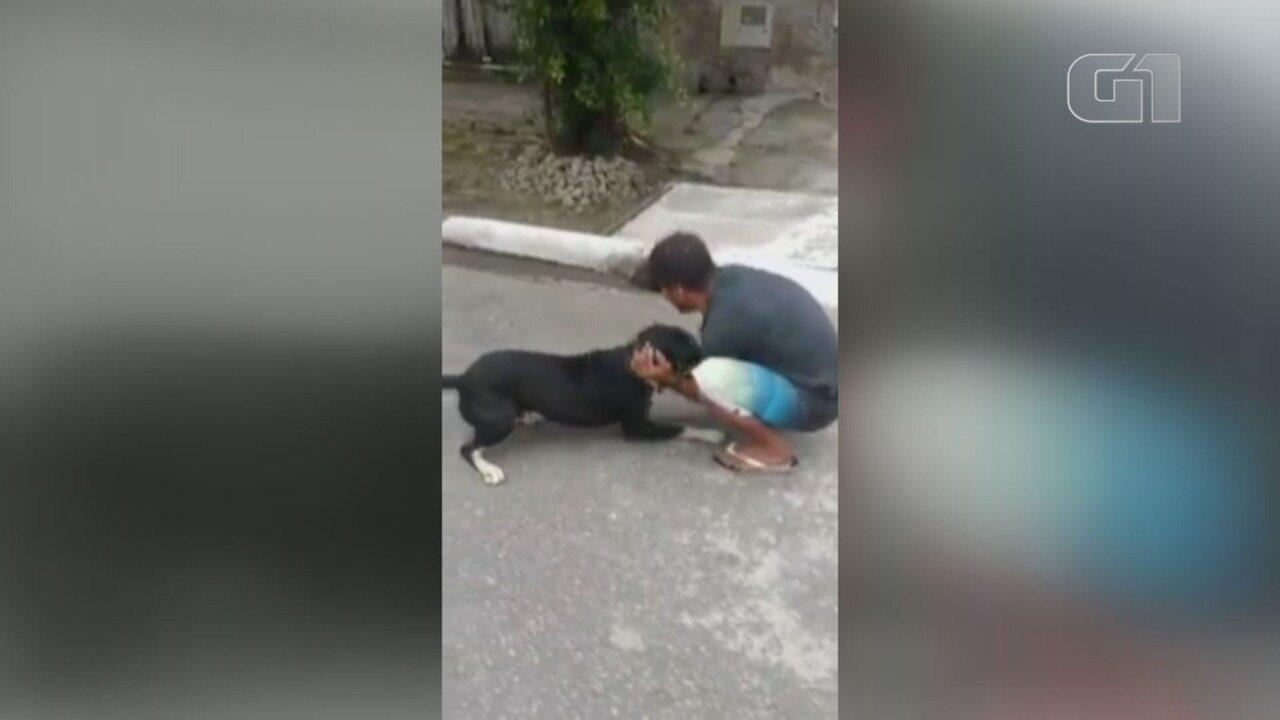 Dono se emociona ao reencontrar cachorro perdido há mais de um ano em Praia Grande, SP