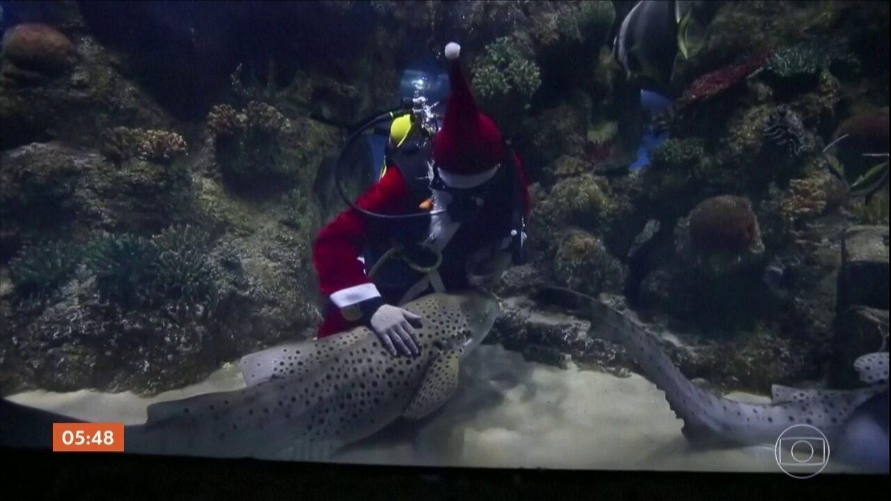 Papai Noel presenteia tubarões para celebrar o Natal em Malta