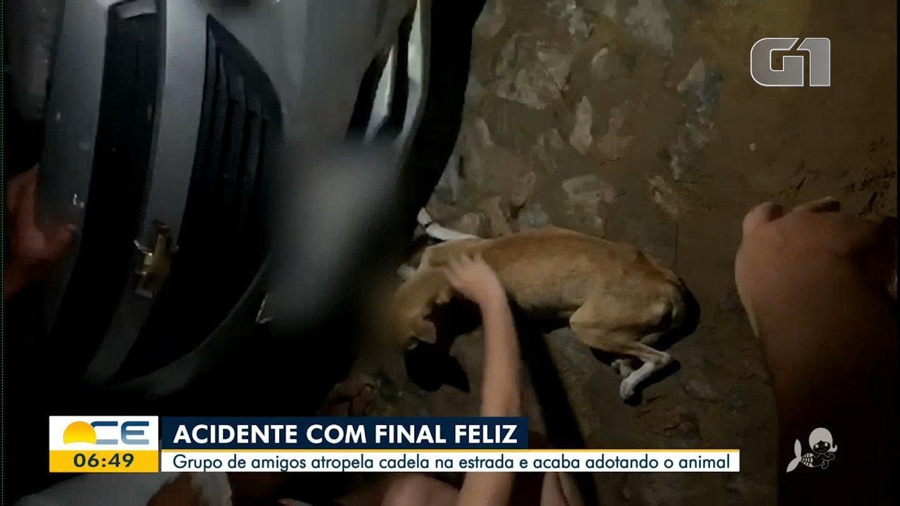 Grupo de amigos atropela cadela e acaba adotando o animal