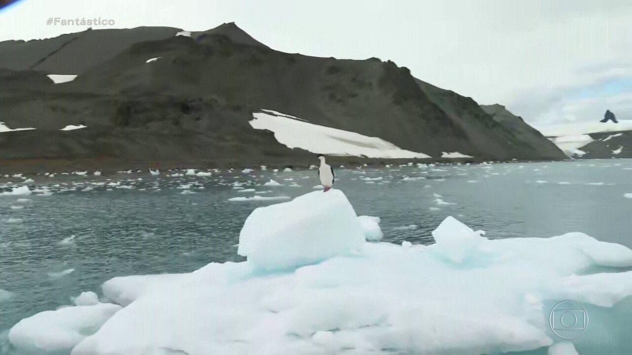 Brasil vai reinaugurar estação de pesquisa na Antártica após incêndio