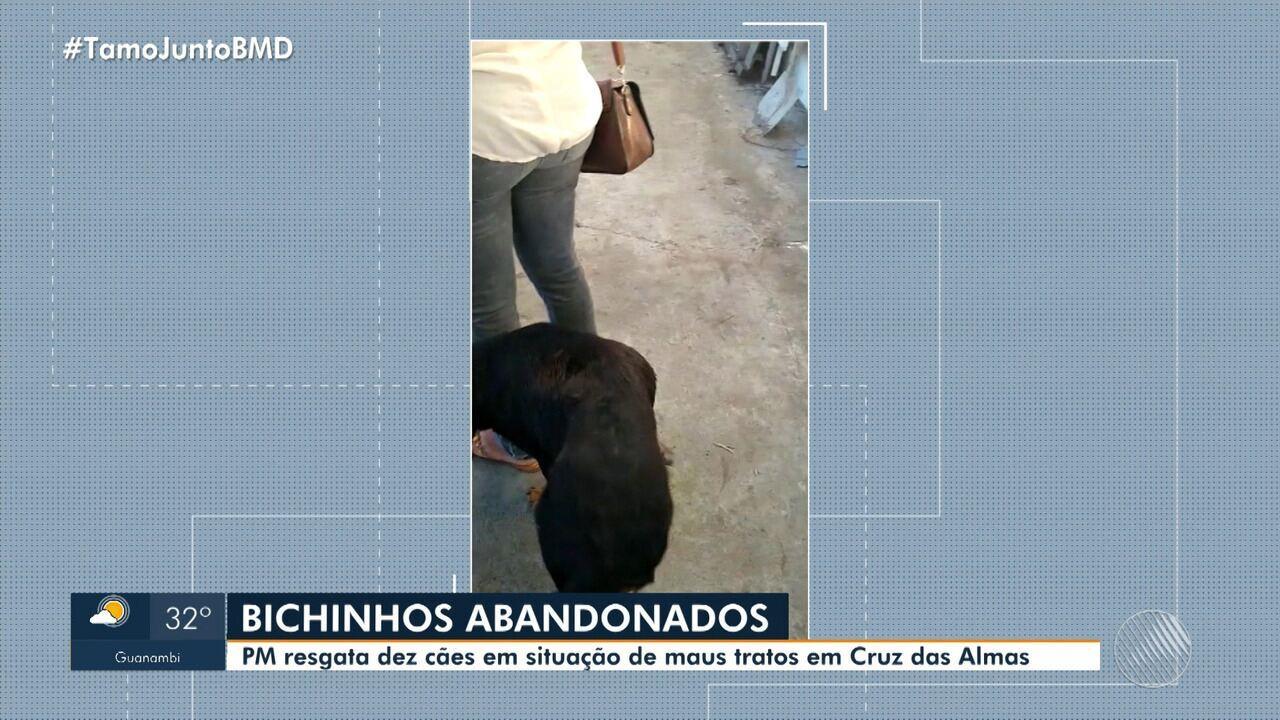 Polícia Militar resgata dez cachorros em situação de maus tratos em Cruz das Almas