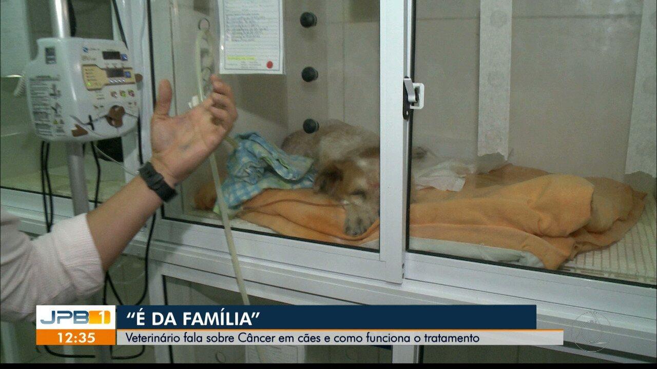 Veterinário fala sobre câncer em cães e como funciona o tratamento em João Pessoa