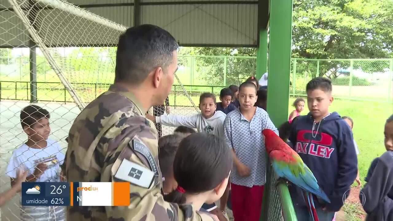 Uma arara vira sensação numa escola de Brazlândia