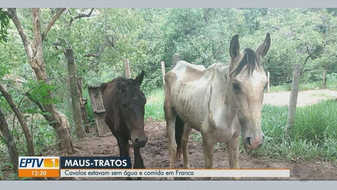 Dois cavalos são resgatados em estado de desnutrição em Franca, SP