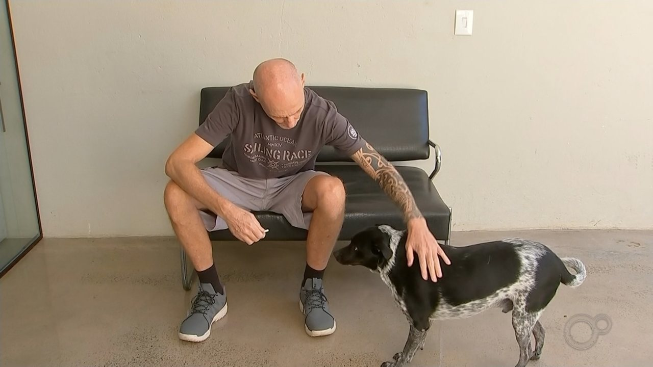 Cão é encontrado carbonizado e amarrado em poste no interior de SP