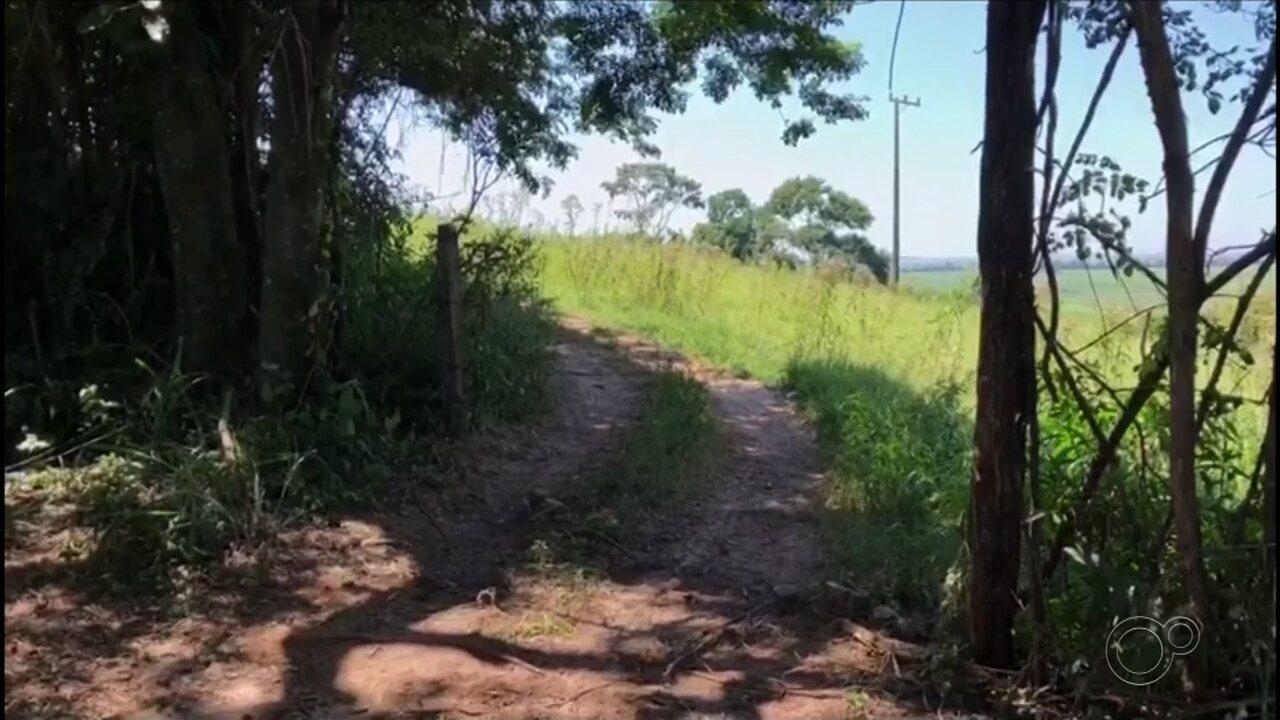 Descarte irregular de animais mortos em propriedade rural incomoda moradores de São Manuel