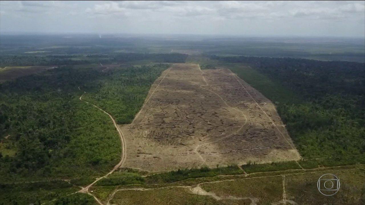 Área desmatada na Amazônia mais que dobrou no primeiro trimestre deste ano