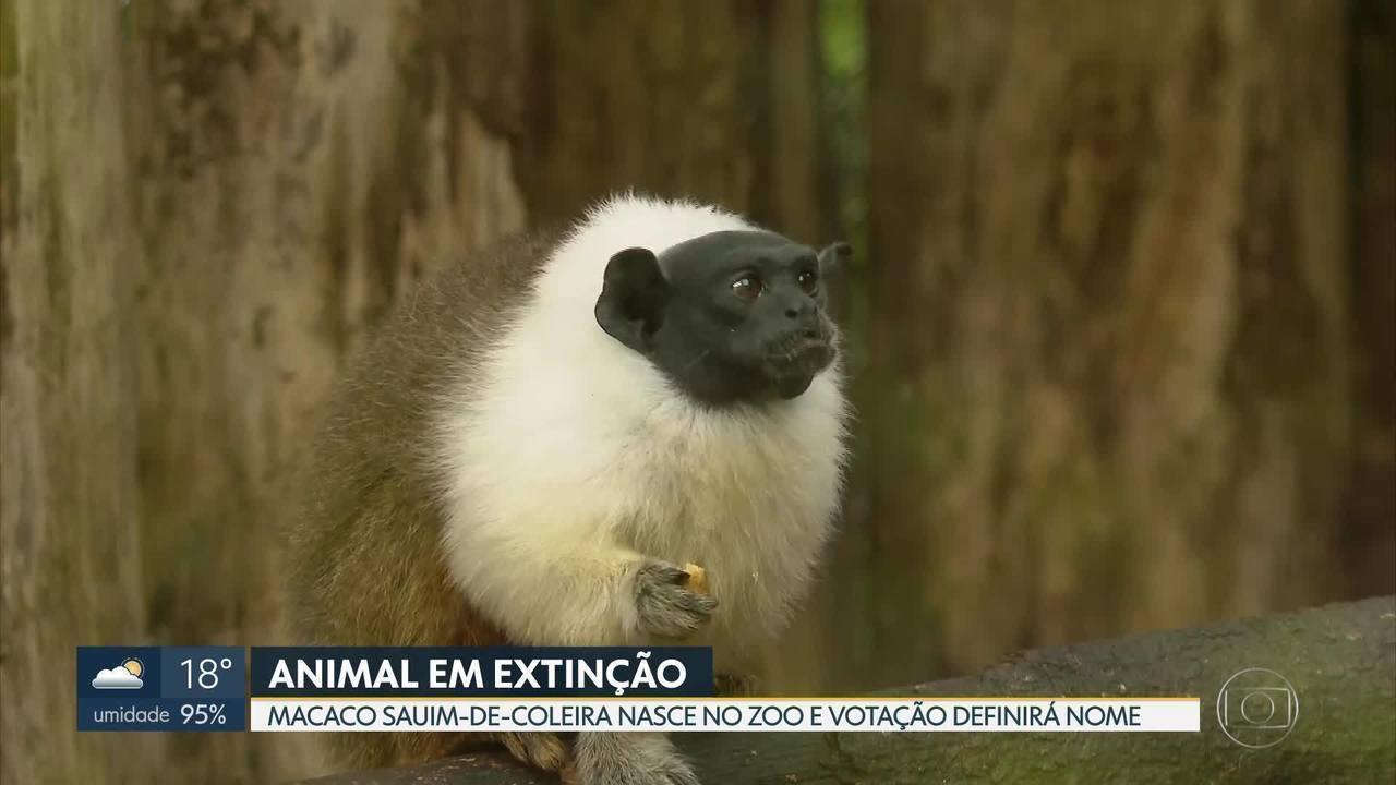 Zoológico de Brasília tem animal novo e raro