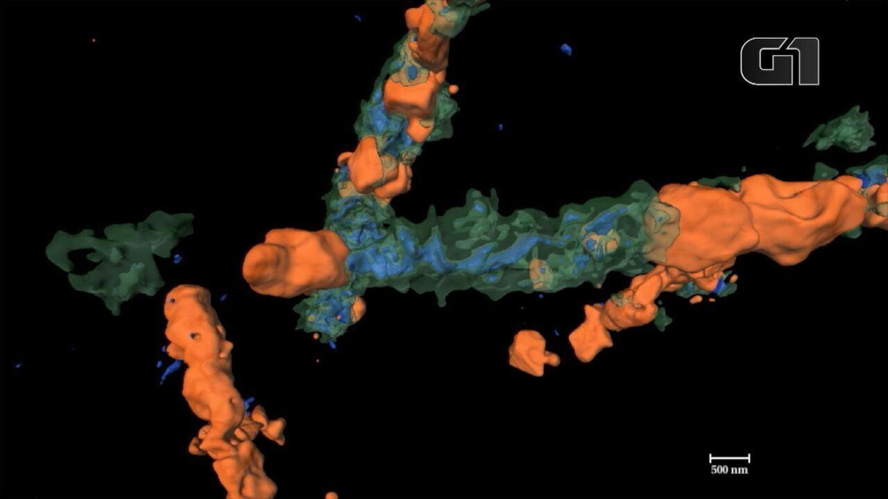 Cientistas produzem imagens em 3D de formas de vida de 1,9 bilhão de anos atrás