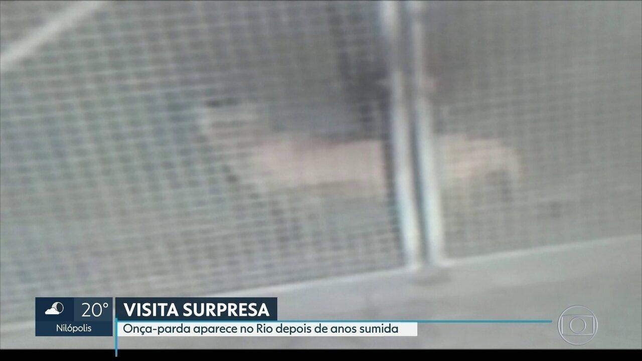 Onça-parda aparece no Rio depois de muitos anos