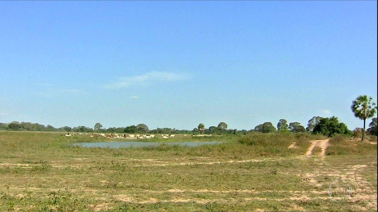 Seca prejudica criação de gados no pantanal do MT