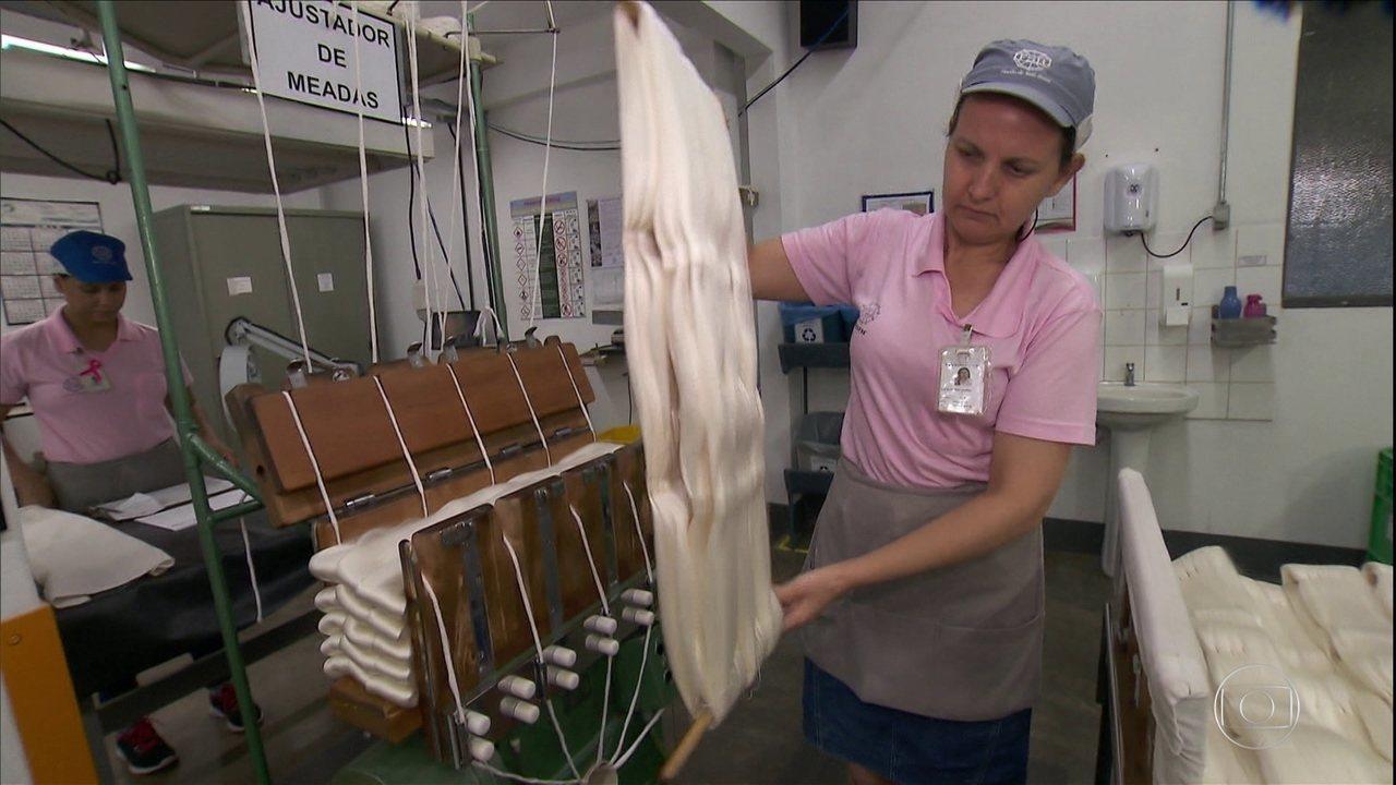 Fio da seda do Brasil é o mais branco do mundo e reconhecido pela alta qualidade