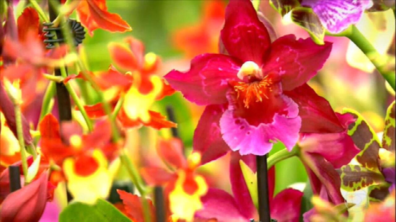 Saiba como cuidar das orquídeas mesmo enquanto não florescem
