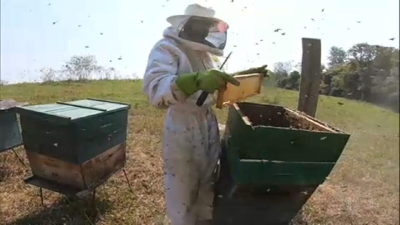 Produção de mel em São Paulo deve ser 30% menor neste ano