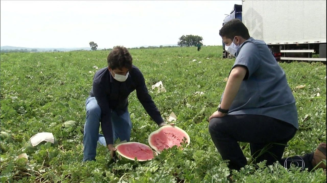Produtores de melancia de Goiás conquistam novos mercados