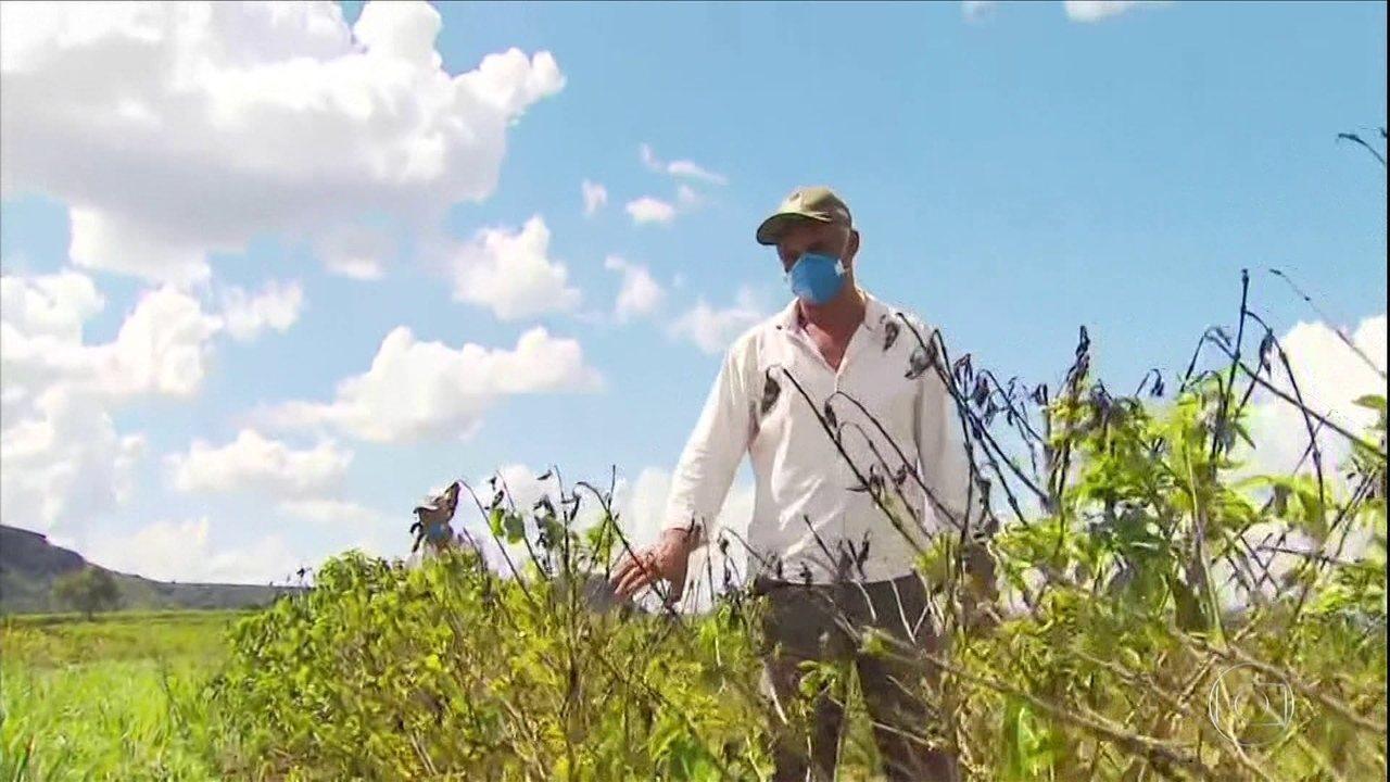 Seca prejudica produção de café no Sul de MG e agricultores calculam perdas em 2021