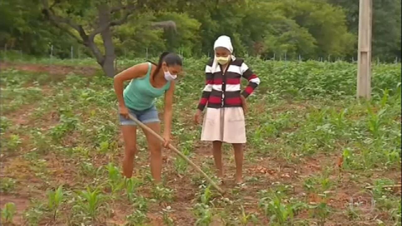 Agricultores do Ceará aproveitam chuvas para plantar feijão