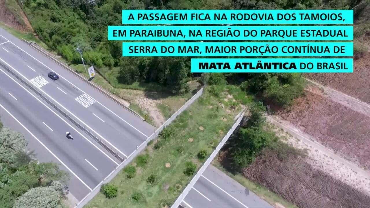 Passagem de fauna na rodovia Tamoios: obra de compensação busca minimizar impactos na biodiversidade local.