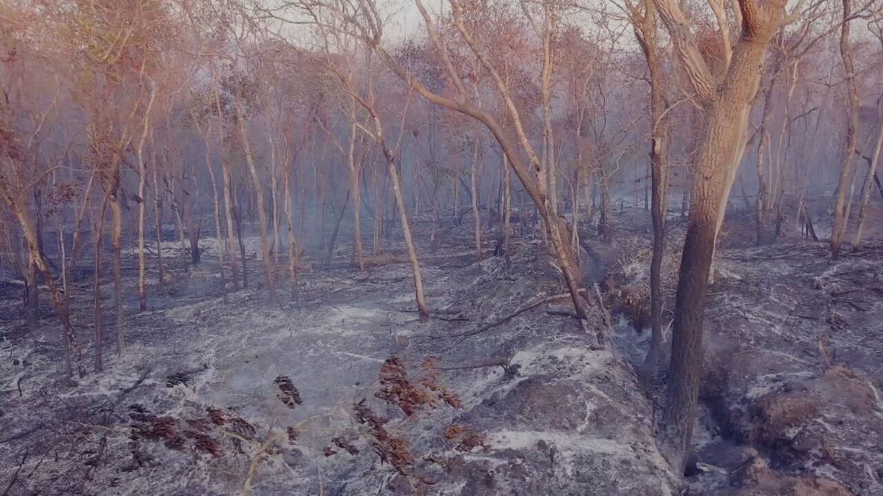 Dados inéditos revelam como o fogo está destruindo os biomas brasileiros
