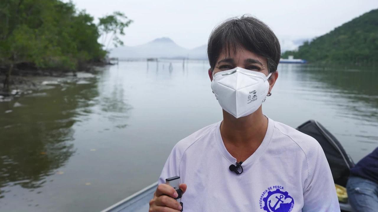 Marília Cunha Lignon monitora os manguezais do litoral sul de São Paulo há 20 anos